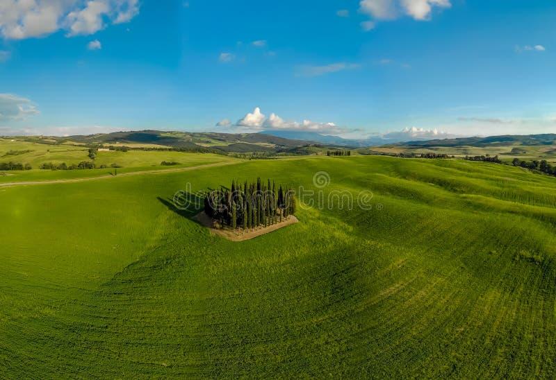 Mooi landschap van Toscanië in Italië - Groep Italiaanse cipressen dichtbij dÂ'Orcia van San Quirico - satellietbeeld - Val-d'O royalty-vrije stock afbeelding