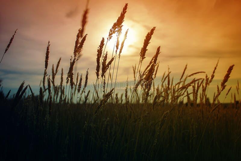 Mooi landschap Zonsondergang op het gebied stock fotografie