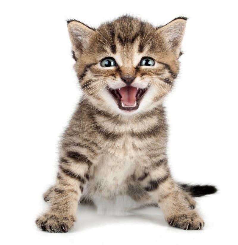 Mooi leuk weinig en katje die mauwen glimlachen royalty-vrije stock foto's