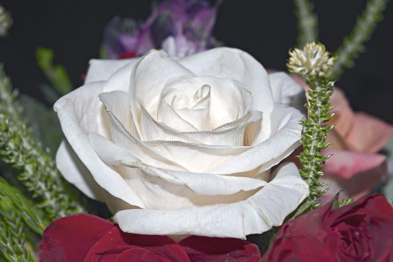 Mooi levend boeket van gemengde bloemen stock fotografie