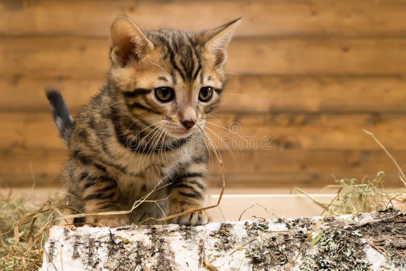 Mooi loopt weinig katje op brandhout van een berkboom stock fotografie
