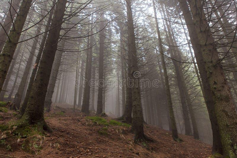 Mooi magisch bos in mist in de herfst royalty-vrije stock afbeelding