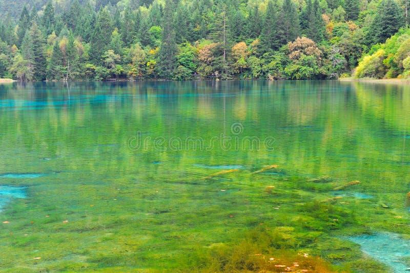 Mooi meer in jiuzhaigou stock foto's