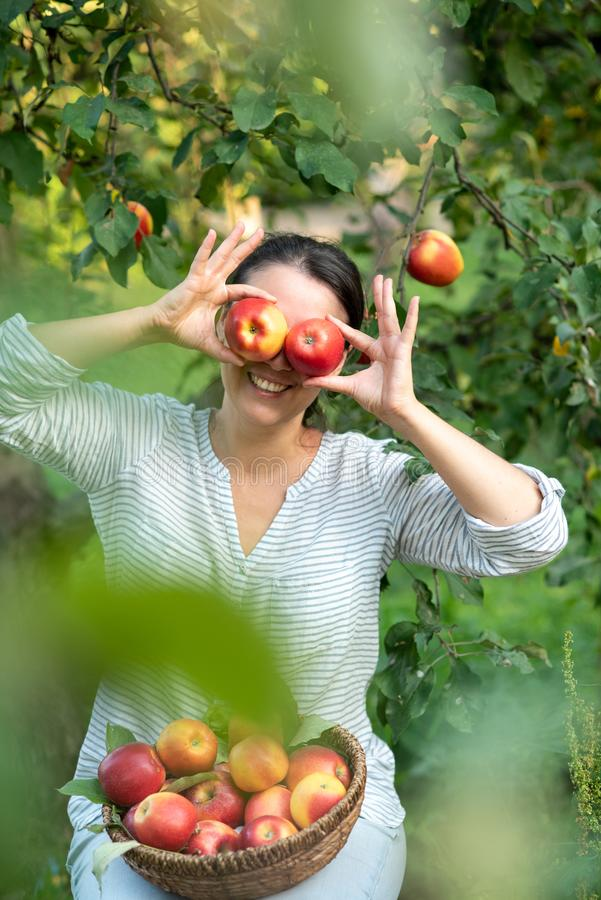 Mooi meisje die rijpe organische appelen in mand in boomgaard of op landbouwbedrijf op dalingsdag plukken royalty-vrije stock afbeeldingen