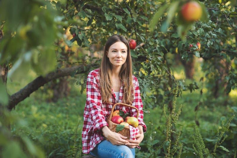 Mooi meisje die rijpe organische appelen in mand in boomgaard of op landbouwbedrijf op dalingsdag plukken stock afbeelding