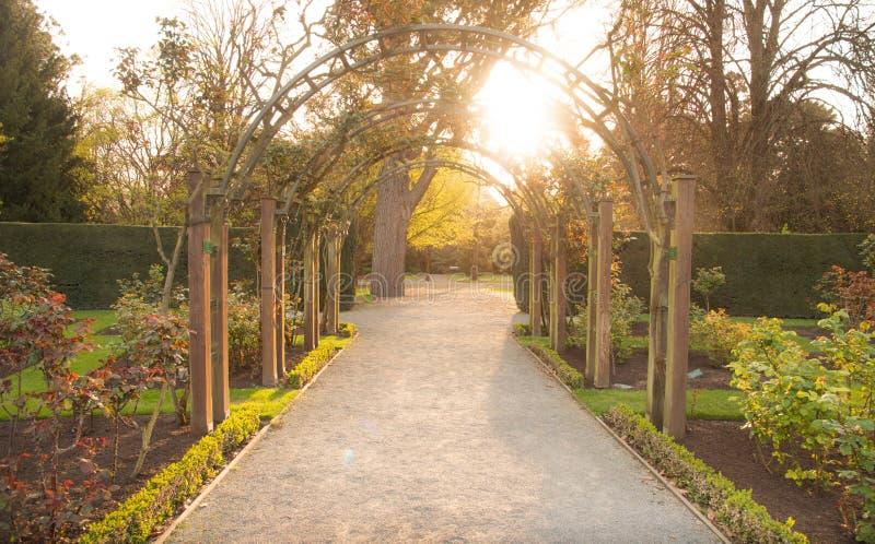 Mooi milieu in Roze tuin in de botanische tuin van Christchurch Het gebied van Canterbury van Nieuw Zeeland bij zonsondergang stock afbeelding