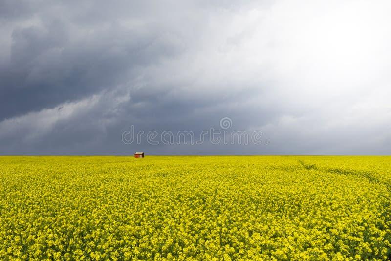 Mooi mosterdgebied stock afbeelding