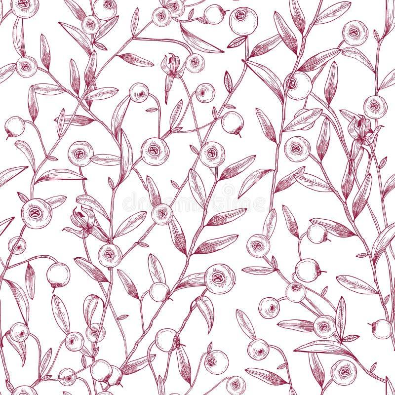 Mooi naadloos patroon die met Amerikaanse veenbessen op stammen met uiterst kleine bladeren tegen witte achtergrond groeien Textu stock illustratie