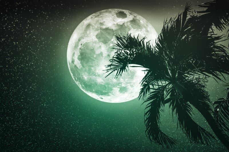 Mooi nachtlandschap van hemel met supermoon achter betelpalm stock fotografie