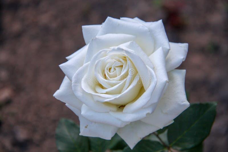 Mooi nam bloem toe royalty-vrije stock afbeeldingen