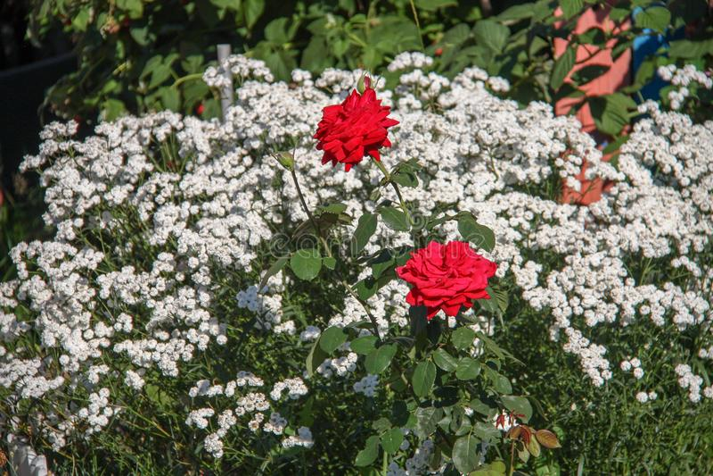 Mooi nam bloem toe royalty-vrije stock foto's