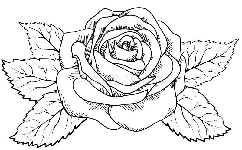 Mooi nam in de stijl van zwart-witte gravure toe. vector illustratie