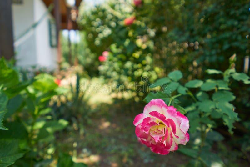 Mooi nam in een tuin en op achtergrond toe een klein huis royalty-vrije stock afbeeldingen