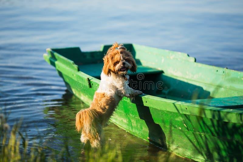 Mooi nat puppy op een boot royalty-vrije stock foto