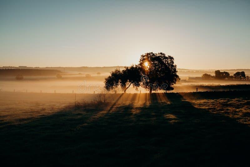 Mooi nevelig landelijk landschap Dawn licht stock afbeeldingen