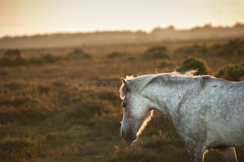 Mooi Nieuw Bosponeypaard gebaad in zonlicht royalty-vrije stock foto