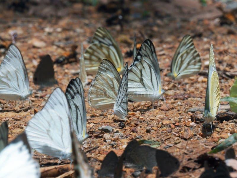 Mooi op Vlinder met onduidelijk beeldachtergrond royalty-vrije stock afbeelding