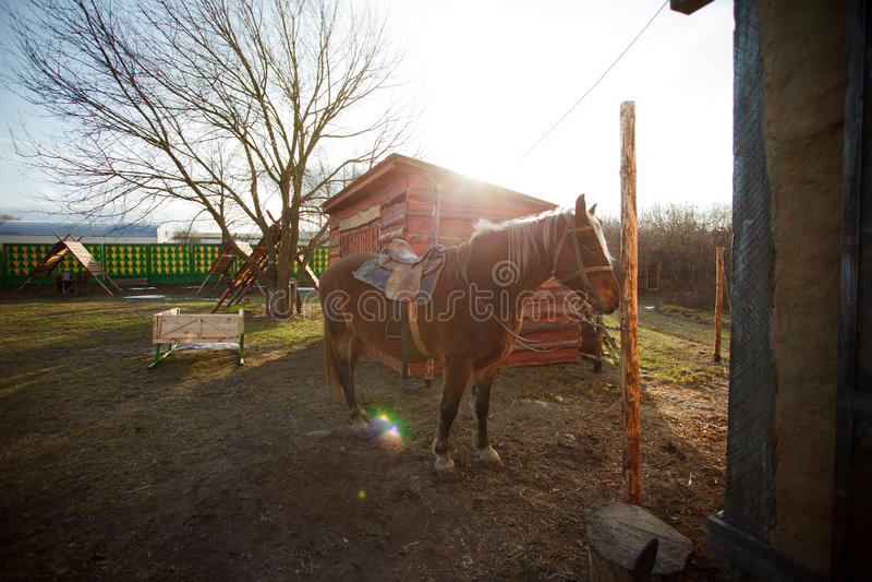 Mooi paard dichtbij een smidswerkruimte stock afbeeldingen