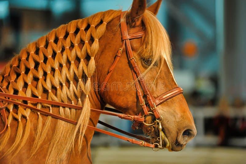 Mooi paard met manen royalty-vrije stock fotografie