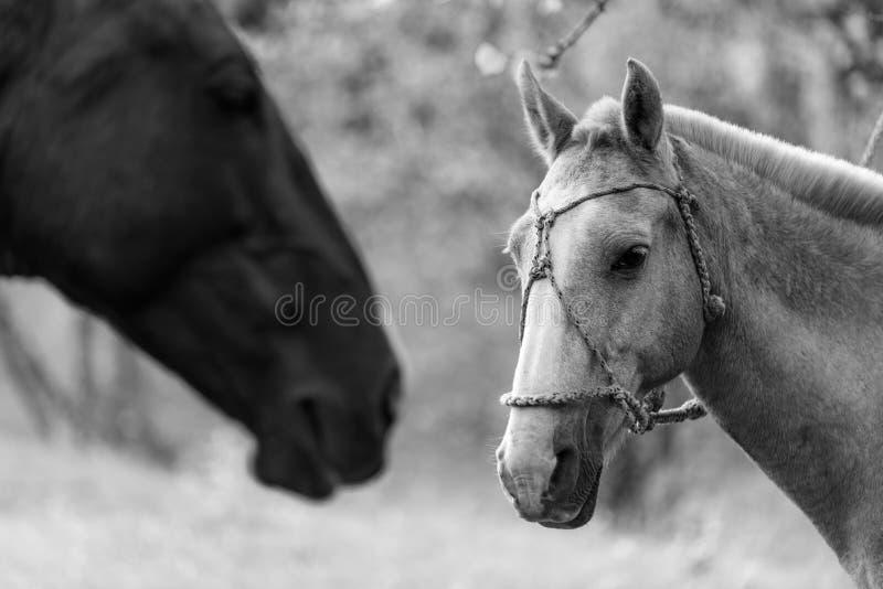 Mooi paardportret bij de aard stock foto's