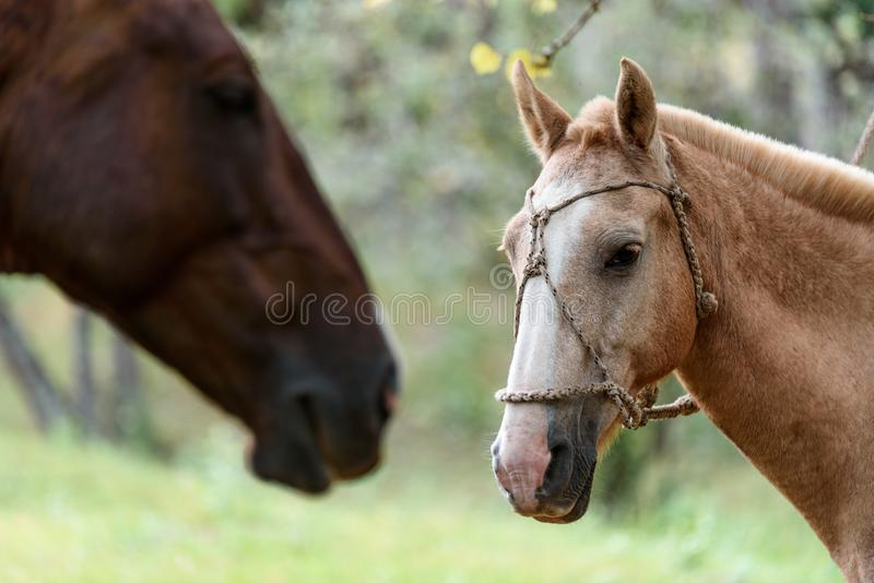 Mooi paardportret bij de aard stock afbeeldingen