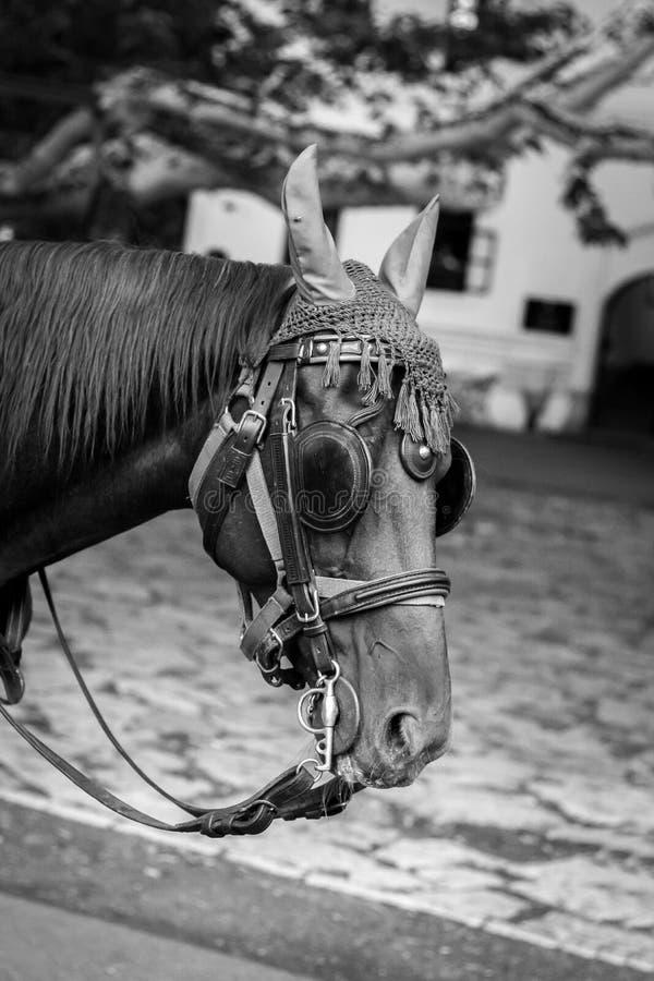 Mooi paardportret met masker royalty-vrije stock afbeelding