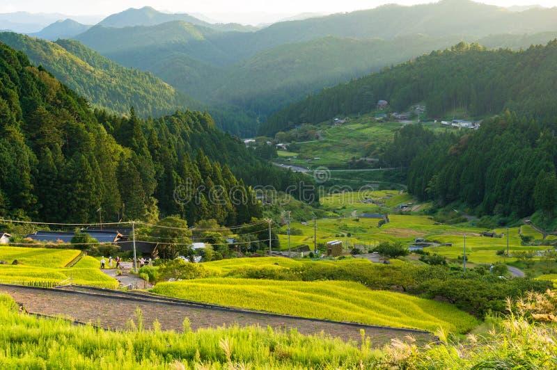 Mooi padiepadieveld van Yotsuya, Aichi-prefectuur, Japan stock afbeelding