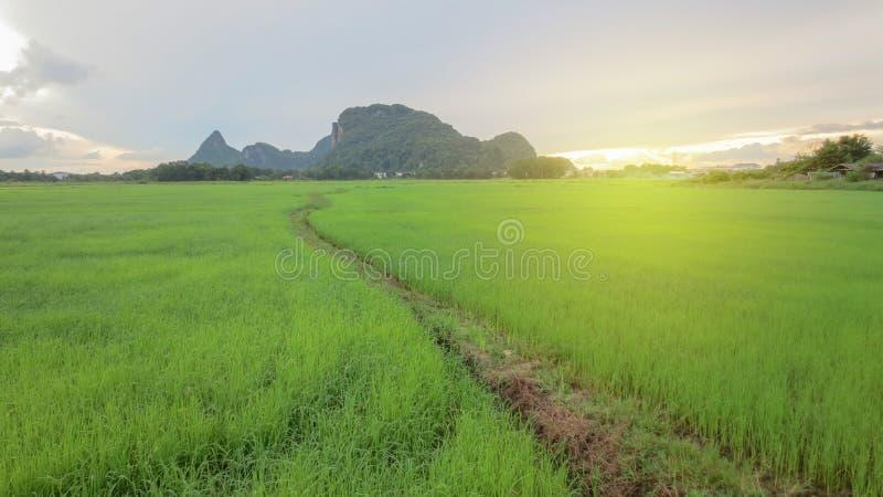 Mooi padieveld met berg en gloed royalty-vrije stock afbeelding