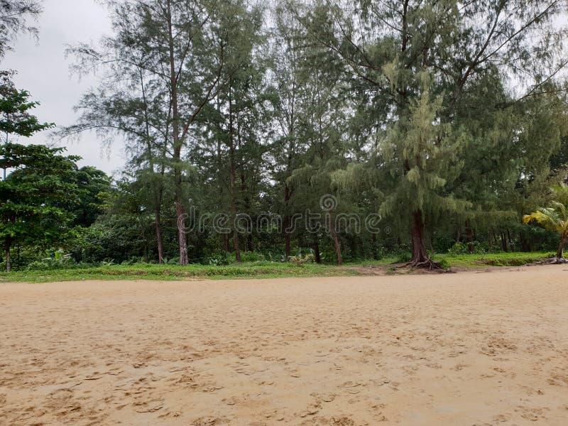 Mooi panorama van boslandschap bij het strand in Khao-LAK, Thailand, Azië royalty-vrije stock fotografie