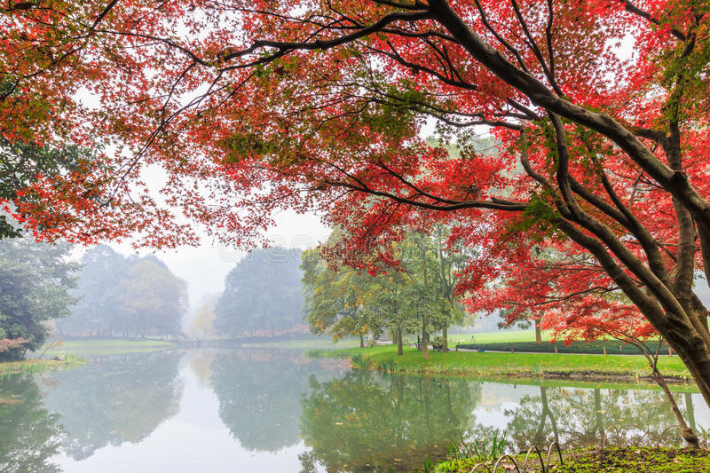 Mooi park in de herfst royalty-vrije stock foto