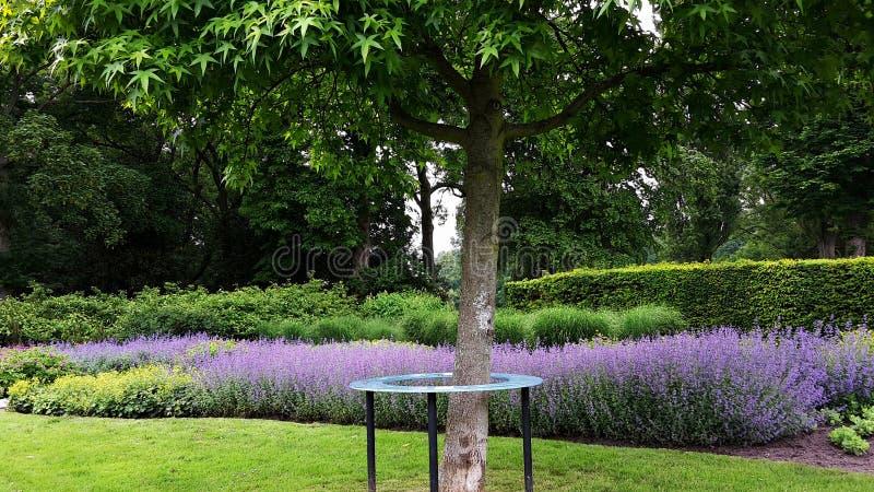 Mooi park met de het bloeien violette Lavendelbloemen royalty-vrije stock fotografie