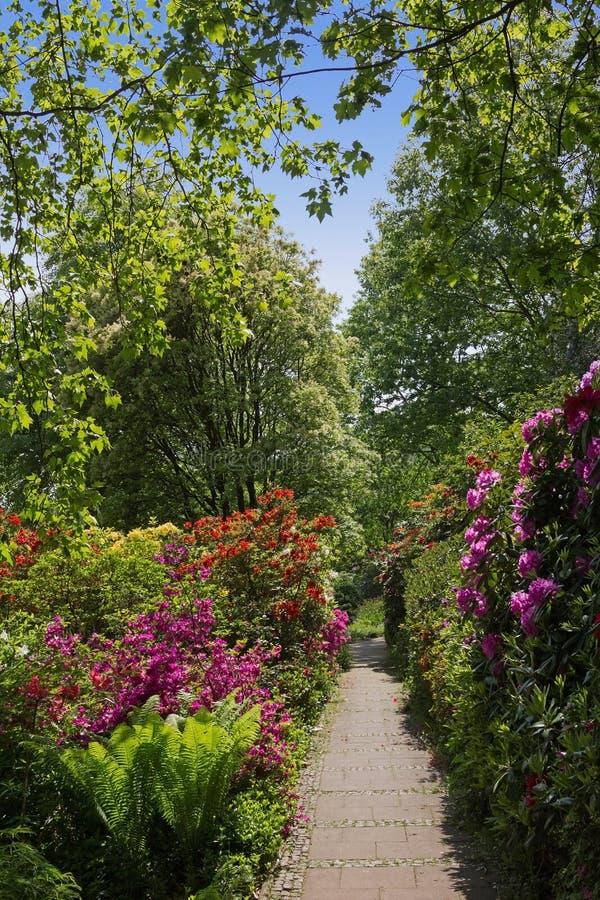 Mooi park met rododendrons en varen stock afbeelding