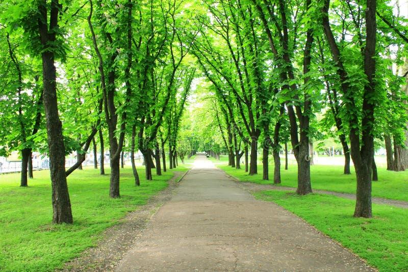 Mooi park met vele groene bomen stock afbeeldingen
