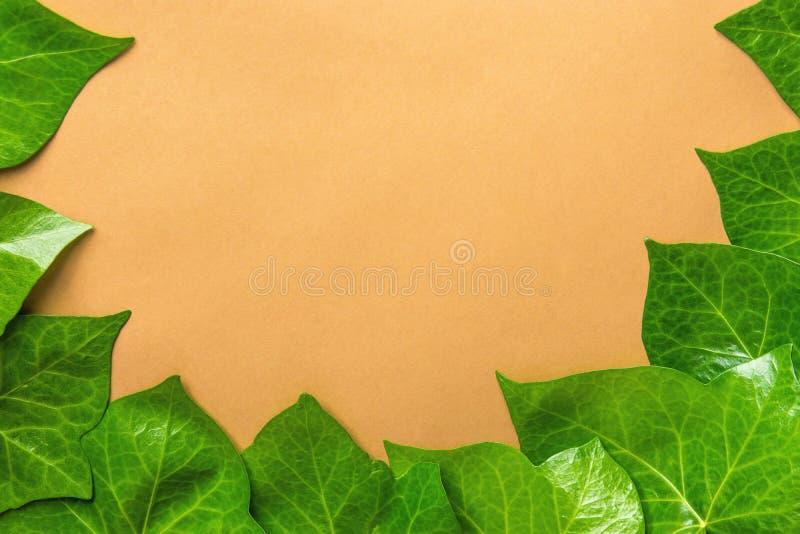 Mooi Patroon van Verse Groene Ivy Leaves Forming Frame Border op Beige Achtergrond Banneraffiche Botanica stock foto's