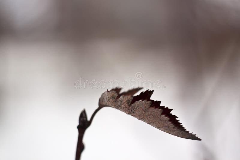 Mooi perspectief op een droog blad in een de winterlandschap royalty-vrije stock foto's