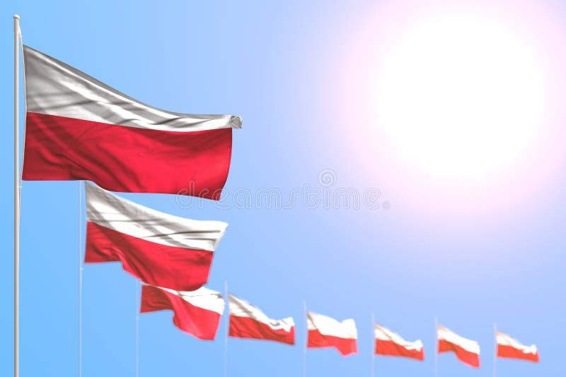 Mooi plaatsten vele vlaggen van Polen diagonaal met selectieve nadruk en vrije plaats voor uw tekst - om het even welke 3d vierin stock illustratie