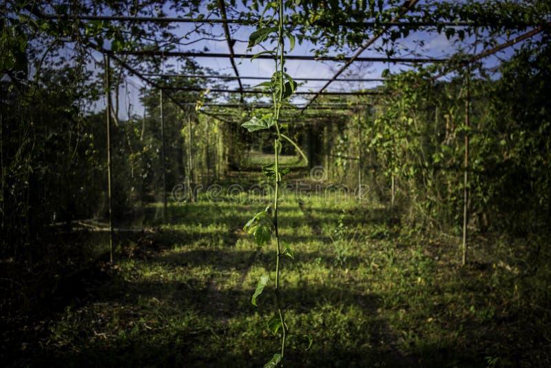 Mooi plattelandslandschap royalty-vrije stock fotografie