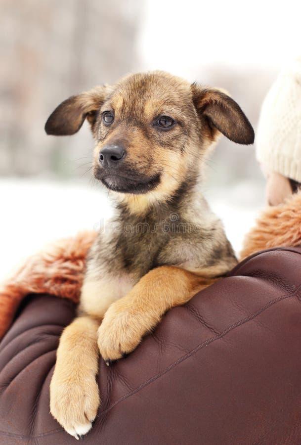 Mooi puppy royalty-vrije stock foto's