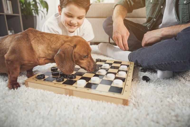 Mooi puppy het snuiven schaakbord dichtbij de mens en jongen stock foto's