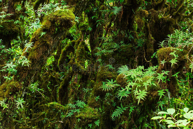 Mooi regenwoud royalty-vrije stock afbeelding