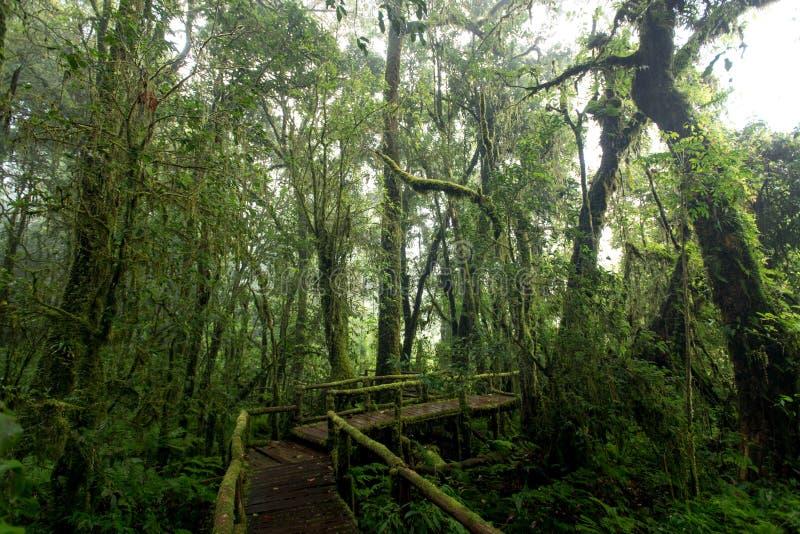 Mooi regenwoud bij aardslepen Ang Ka Doi Inthanon, Chian stock afbeelding