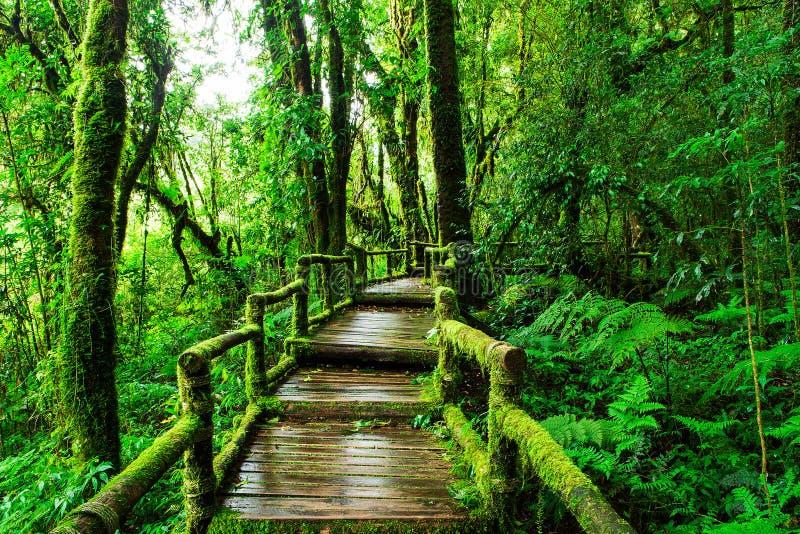 Mooi regenwoud bij ANG-de aardsleep van Ka royalty-vrije stock foto's