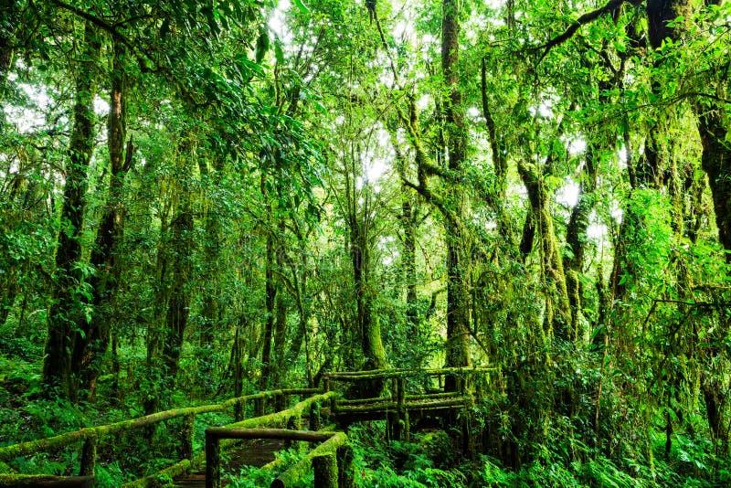 Mooi regenwoud bij ANG-de aardsleep van Ka stock afbeelding