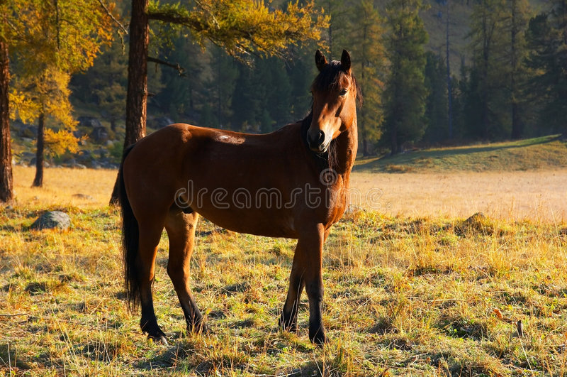Mooi rood paard. stock foto's