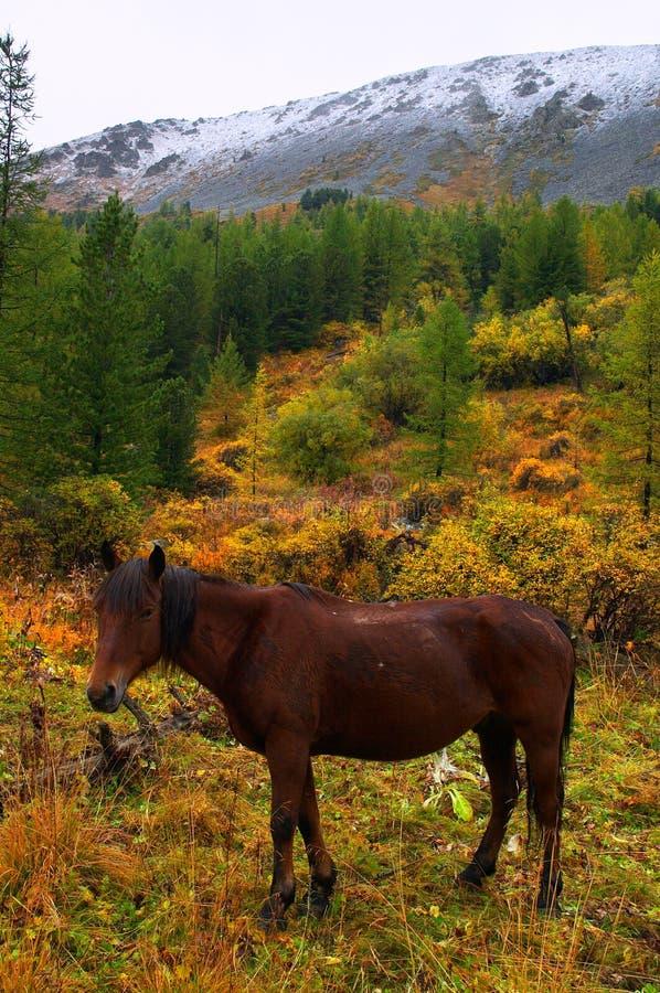 Mooi rood paard. royalty-vrije stock foto's