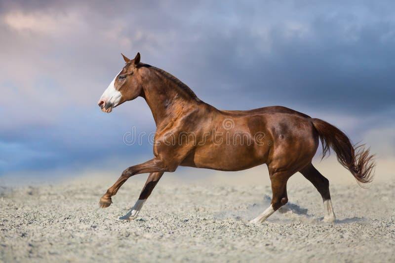 Mooi rood paard in motie stock afbeelding
