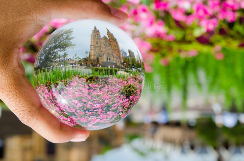 Mooi roze bloemengebied bij st Mary ` s de fotografie van kathedraalsydney in de duidelijke bal van het kristalglas royalty-vrije stock foto's