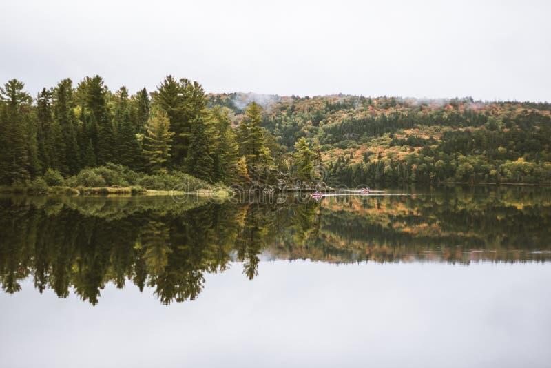 Mooi schot van bos met een meer en een bezinning stock foto