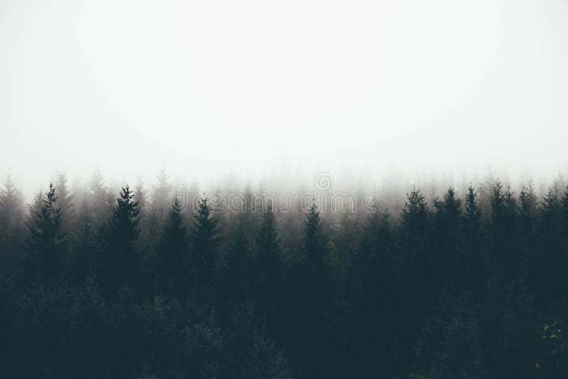 Mooi schot van een dik bos in mist met pijnboombomen en spaties voor tekst royalty-vrije illustratie