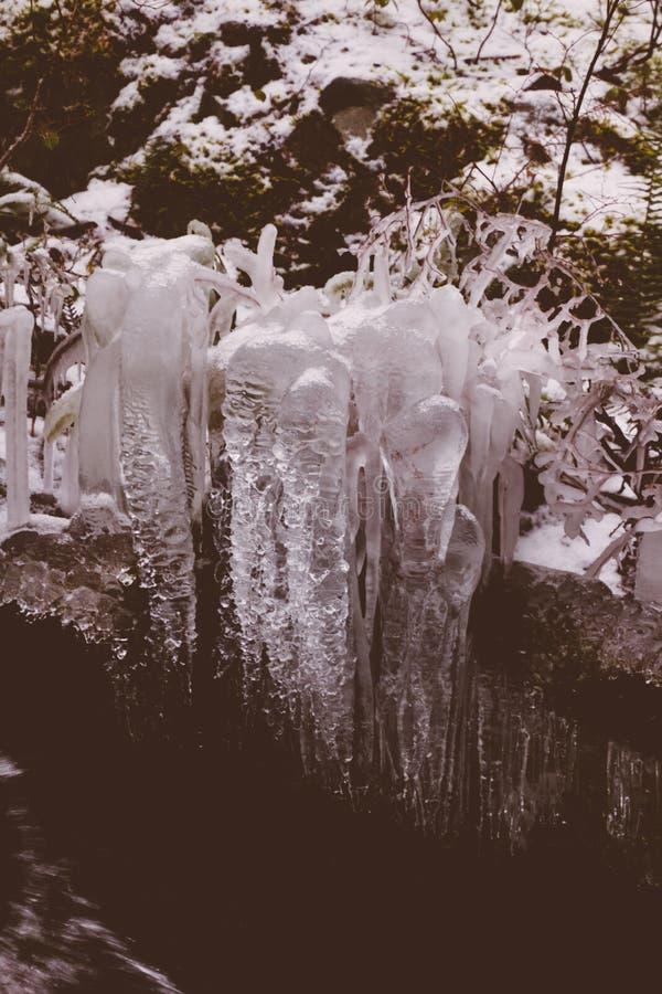 Mooi schot van een vorst in het bos tijdens de winter stock afbeelding